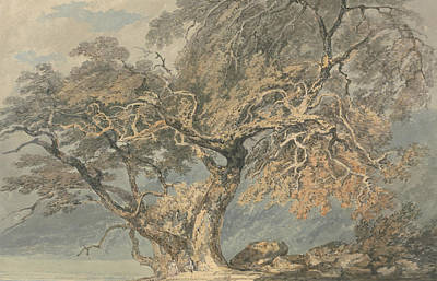 18th Century Painting - A Great Tree by Joseph Mallord William Turner