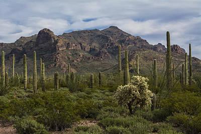 Photograph - A Green Desert Forest  by Saija  Lehtonen