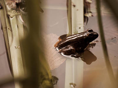 A Green Frog And A Fly Art Print by Rachel Morrison