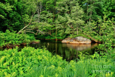 Photograph - A Green Paradise by Alana Ranney