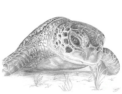 Green Sea Turtle Drawing - A Green Sea Turtle Grayscale by Stacey May