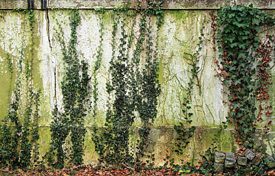 Photograph - A Green Wall by Cora Wandel