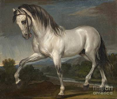 A Grey Stallion  Art Print by Celestial Images