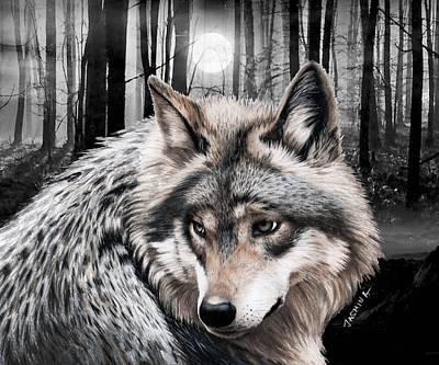 Drawing - A Grey Wolf  by Jasmina Susak