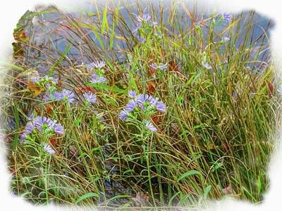 Photograph - A Group Of Grass Stems And Purple Aster In The Water. Fine Art P by Rusty R Smith