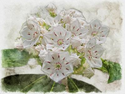 Digital Art - A Group Of Mountain Laurel Flowers. by Rusty R Smith