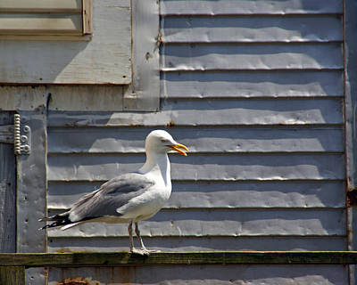 Photograph - A Gull's Position by Lynda Lehmann