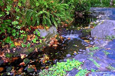 Photograph - A Gurgling Stream In Oregon by Kirsten Giving