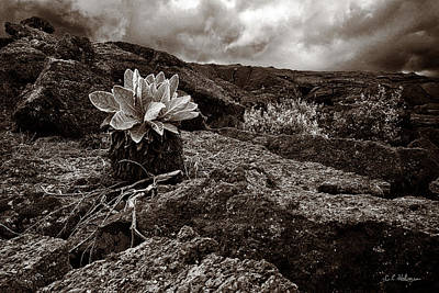 Photograph - A Hard Existence - Sepia by Christopher Holmes