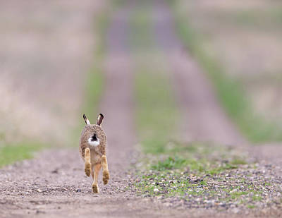 Photograph - A Hare's Tail by Peter Walkden