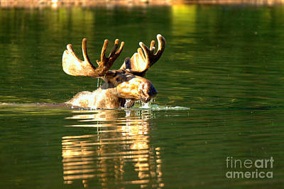 Photograph - A Head Above Water by Adam Jewell