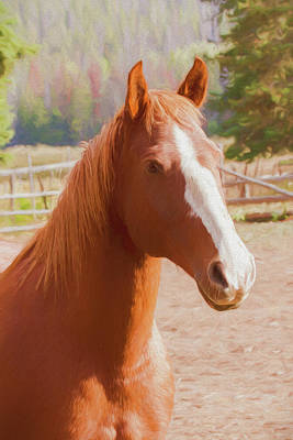 Photograph - A Head And Shoulder Portrait Of A Brown Horse With A White Face  by Rusty R Smith