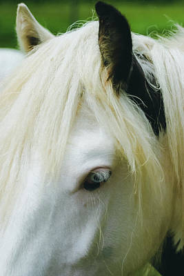 Photograph - A Head Piece Of A Beautiful Gypsy Vanner Horse. by Rusty R Smith