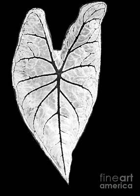 Large Leaves Photograph - A Heart In Nature by Sabrina L Ryan