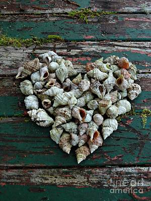 A Heart Made Of Shells Art Print