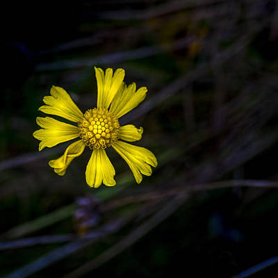 Florida Flowers Photograph - A Heart Of Gold by Marvin Spates