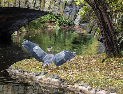 Photograph - A Heron's Wings by Keith Boone