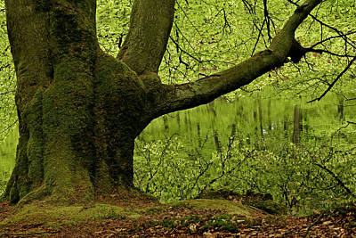 Photograph - A Hidden Forest Lake by Inge Riis McDonald
