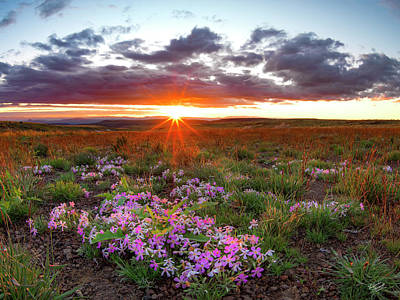 Photograph - A High Desert Spring by Leland D Howard