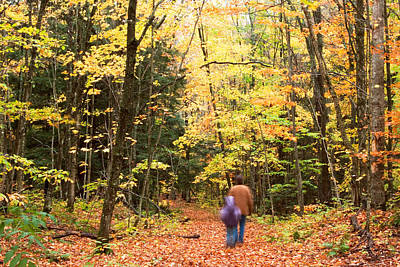 A Hike Into The Forest Art Print by Amanda Kiplinger