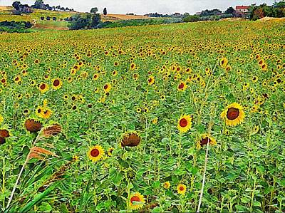 Photograph - A Hillside Of Sunflowers by Dorothy Berry-Lound