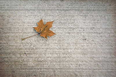 Maple Leafs Photograph - A Hint Of Autumn by Scott Norris