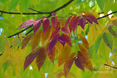 Photograph - A Hint Of Fall by Marty Fancy