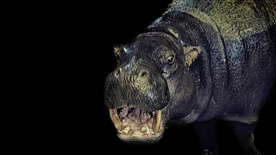 Cartoon Drawing Photograph - A Hippos Smile by Martin Newman