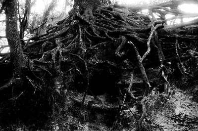 Tree Roots Digital Art - A Hobbits Home by David Lee Thompson