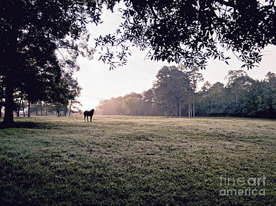 Dreamy Pink Park Scene Photograph - A Horse And Field by Rachel Morrison