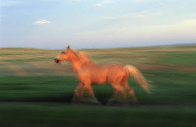 Prairie Sunset Photograph - A Horse At Sandal Ranch Near Howes by Joel Sartore