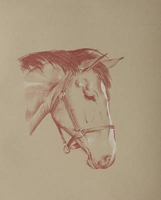 Drawing - A Horse Called Cocoa by Wendy Booth