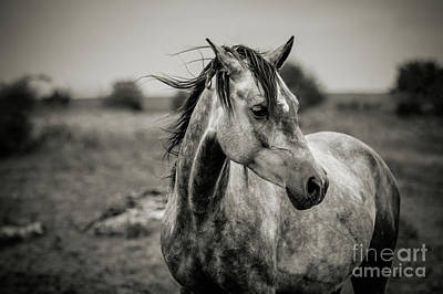 A Horse In Profile In Black And White Art Print