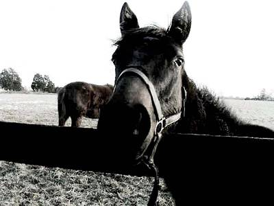 Photograph - A Horse In The Country by Fareeha Khawaja