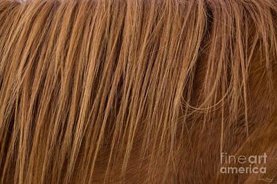 Photograph - A Horse Mane by Jennifer White