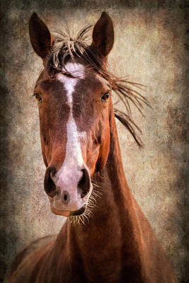 Photograph - A Horse Of Course by Linda Tiepelman