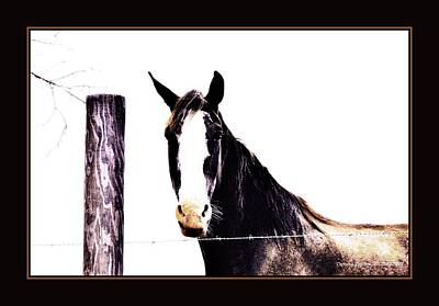 Photograph - A Horse Portrait by Sherrie Conkel