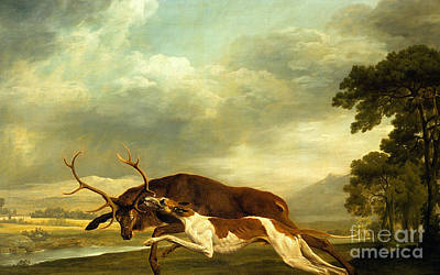 Stag Painting - A Hound Attacking A Stag by George Stubbs