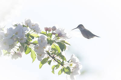 Photograph - A Hummingbird's Dream by Penny Meyers