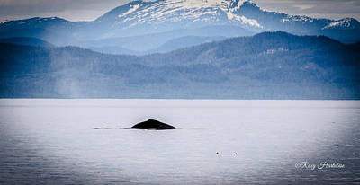 Photograph - A Humpback Appears by Roxy Hurtubise