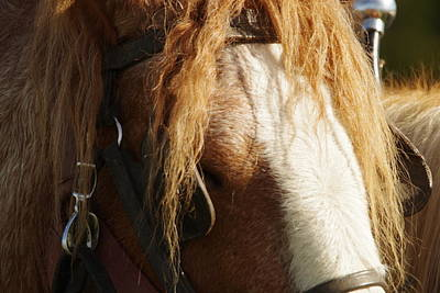 Draft Horses Photograph - Loyalty by Jeff Swan