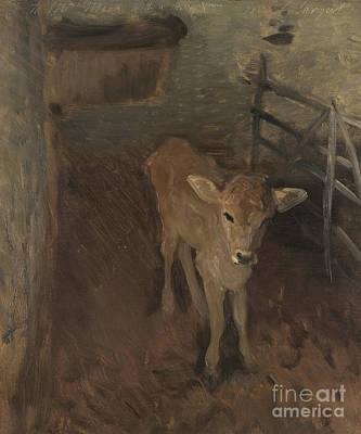 Cute Cows Painting - A Jersey Calf, 1893 by John Singer Sargent