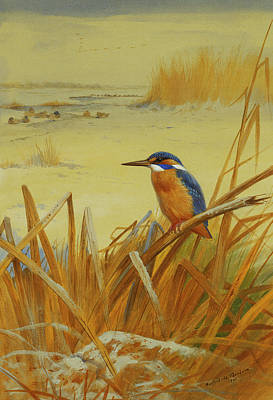 Kingfisher Painting - A Kingfisher Amongst Reeds In Winter by Archibald Thorburn