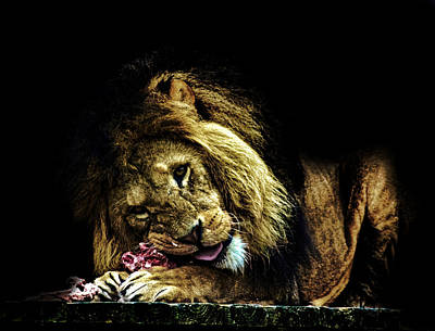 Bigcat Photograph - A King's Feast by Martin Newman