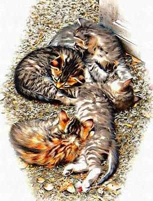 Photograph - A Kitten Cluster by Dorothy Berry-Lound