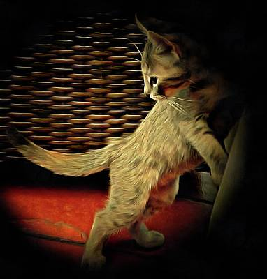 Abandoned Pets Digital Art - A Kitten Tail by Dorothy Berry-Lound
