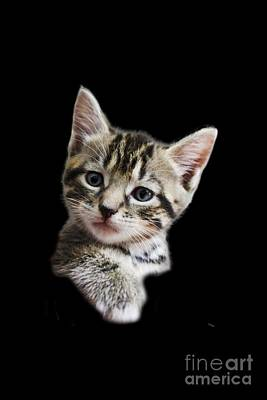 Photograph - A Kittens Helping Hand On A Transparent Background by Terri Waters