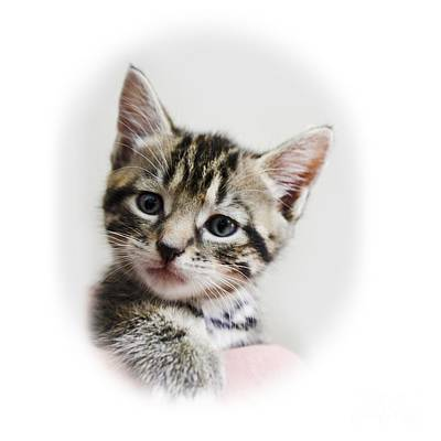 Cats Photograph - A Kittens Helping Hand On Transparent Background by Terri Waters