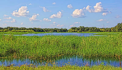 Photograph - A Land Called Myakka 3 by HH Photography of Florida