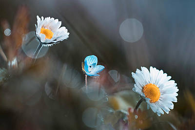 Daisy Photograph - A Land Where Everything Can Happen by Fabien Bravin